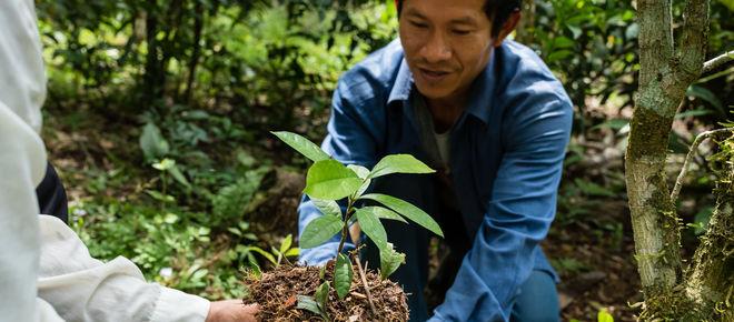 Aufforstung im Regenwald