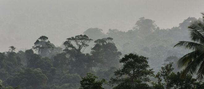 Nebliger Regenwald zieht sich einen Berg hinauf