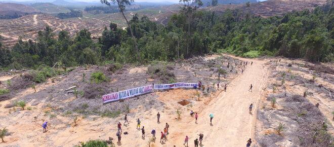Proteste gegen Palmölplantage in Indonesien abgeholzte Fäche riesiges Transparent der Bewohner