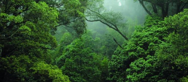 Regenwald im Kongo