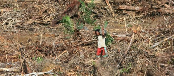 Ölpalmplantage auf Papua