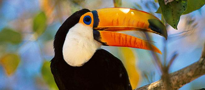 Der Tukan ist ein symbol für die Artenvielfalt