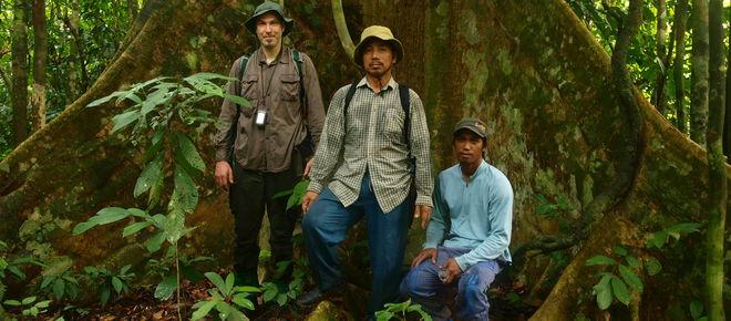 Robert und zwei Einheimische vor einem Urwaldriesen