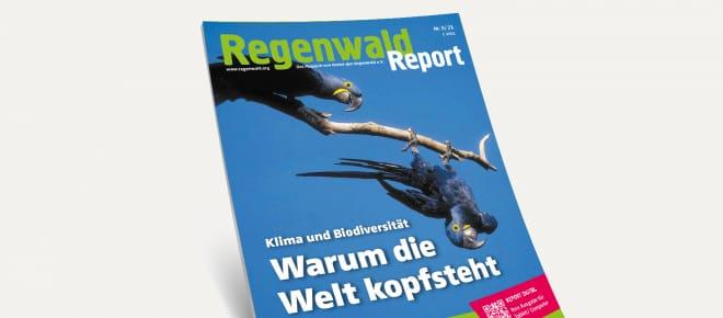 3D-Ansicht des Covers vom Regenwald Report 3/21