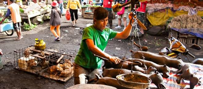 Wildtiermarkt