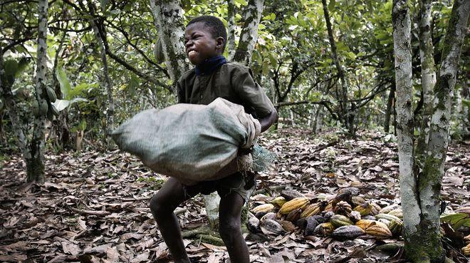 Kinderarbeit auf Kakao-Plantage, Elfenbeinküste