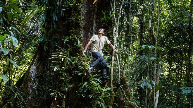 Francisco klettert auf einen Baum im Regenwald