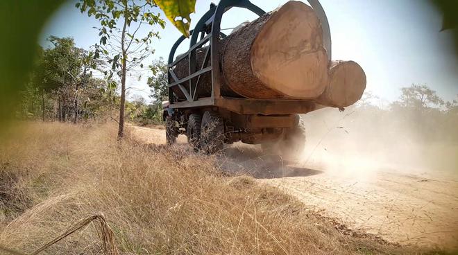 Holzlaster in Kambodscha
