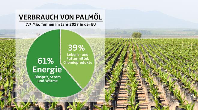 COLLAGE - Diagramm Palmölverwendung EU 2017 mit Palmölplantage als Hintergrund