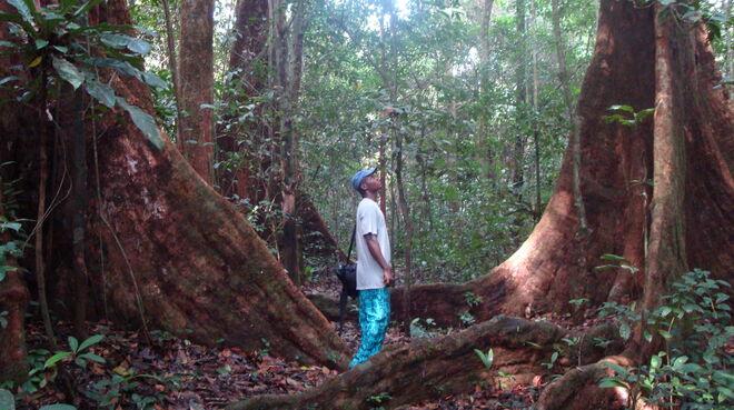 Mann zwischen Bäumen in Kamerun