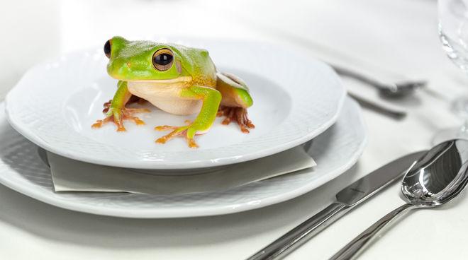 Frosch auf dem Teller