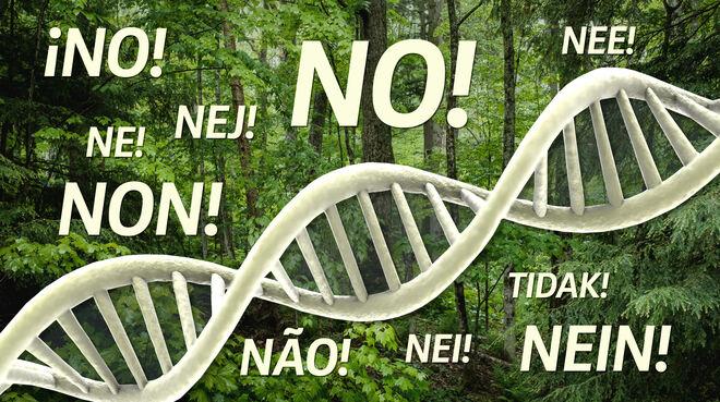 Collage - DNA im Wald