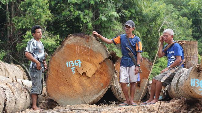 Rodung im Kinipan-Wald - Indigene neben Baumstämmen