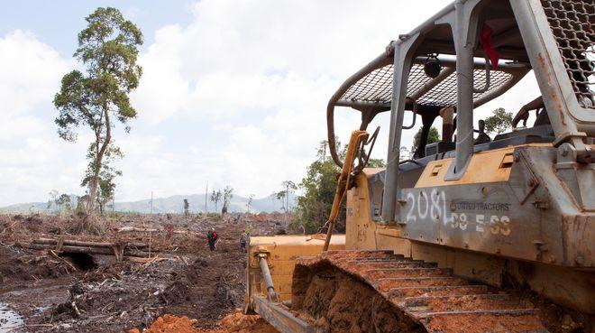 Bulldozer rodet Regenwald