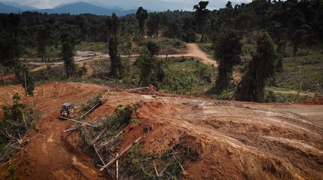 Rodung für Palmöl-Plantage in Sarawak