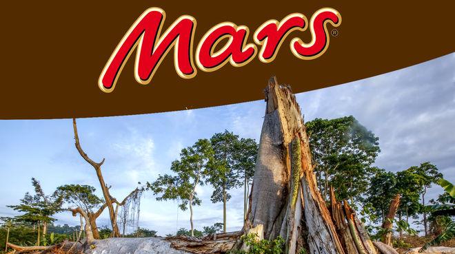 Montage: Rodung von Regenwald + Mars Logo