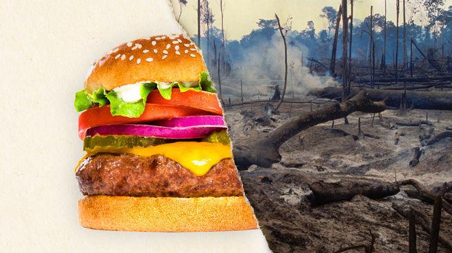 Ein geteiltes Foto – zur Hälfte ein Burger, zur Hälfte abgeholzter Regenwald