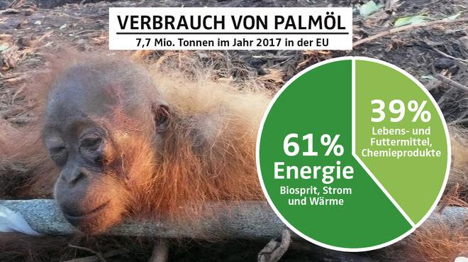 Collage - Palmölverwendung EU 2017 mit Gefesseltes Orang-Utan-Baby - DE