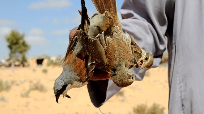 Vogelfang in Ägypten