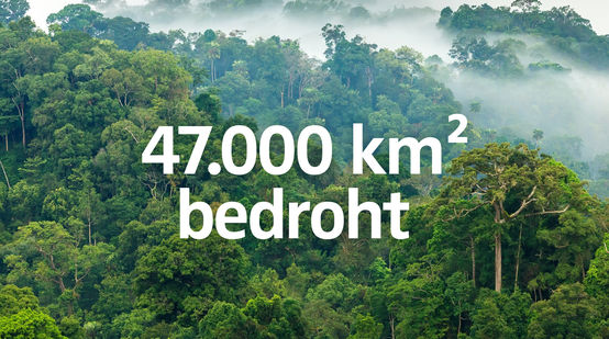 "Regenwald Nebel - Text ""47000km2  Regenwald bedroht"""
