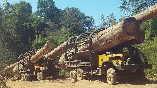 Lkw schmuggeln illegal in Kambodscha geschlagenes Holz nach Vietnam
