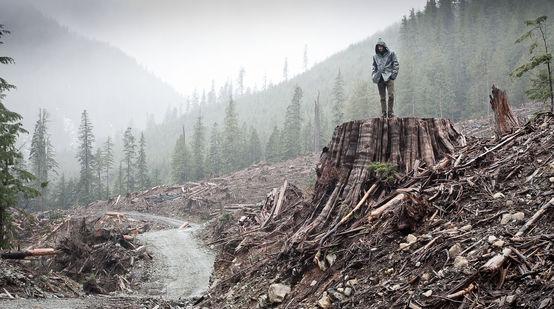 Rodung von Küstenregenwald auf Vancouver Island, British Columbia, Kanada