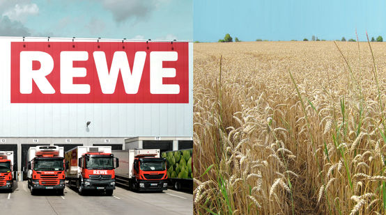 Collage REWE Logistikzenrumg + Weizenfeld