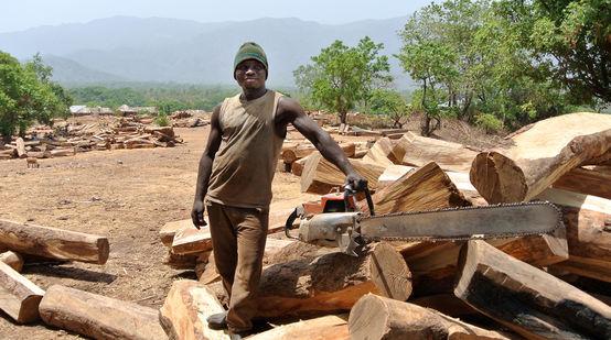 Holzfäller mit Motorsäge auf Lagerplatz für Palisander-Stämme in Nigeria
