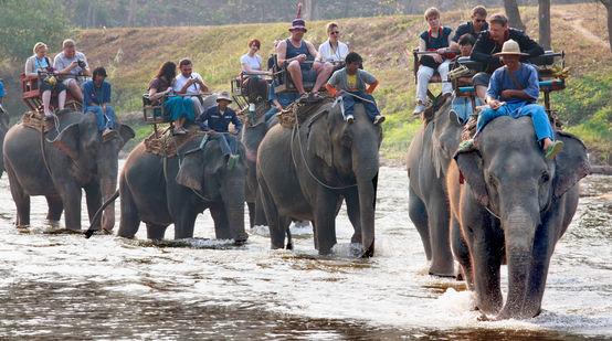 Elefanten Vergiftet Weil Sie Auf Den ölpalm Plantagen Stören