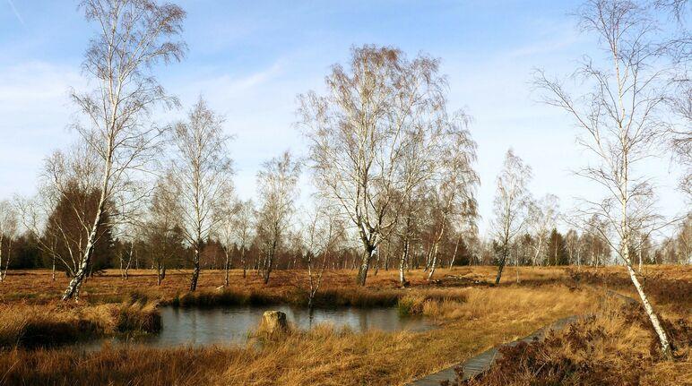 Moorlandschaft mit Holzpfad