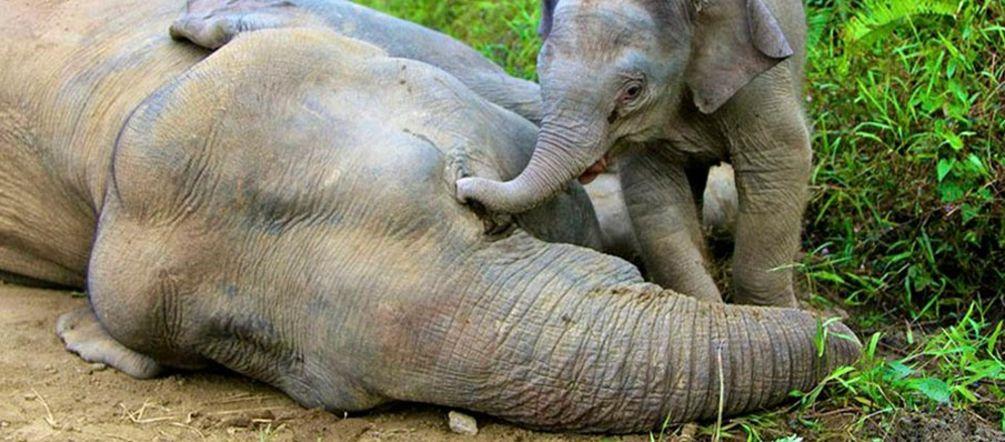 über 100000 Unterschriften Für Den Elefantenschutz Rettet Den