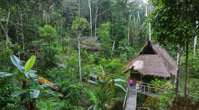 Mahagonibaum im regenwald  Mahagonibaum Im Regenwald: Wasserfall regenwald.