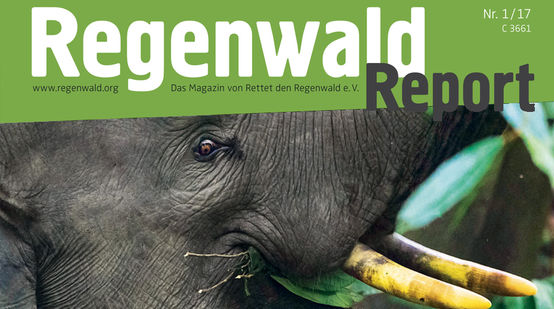 Regenwald Report 1/17 Cover