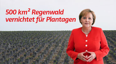 Collage: Angela Merkel vor Palmöl Plantagen in Indonesien