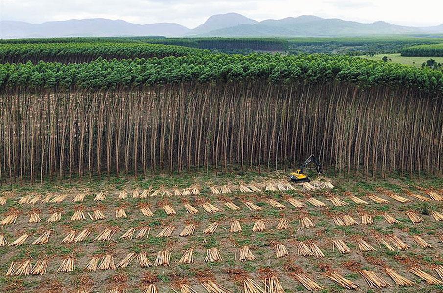 Berühmt Sagen Sie der UNO: Plantagen sind kein Wald! - Rettet den #PW_68