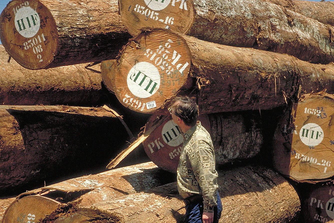 Fragen Und Antworten Zu Tropenholz Rettet Den Regenwald E V