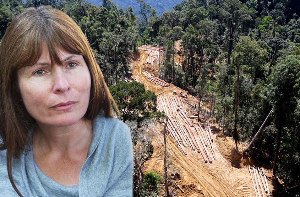 Palisanderbaum im regenwald  Regalsystem Metallschienen | ambiznes.com