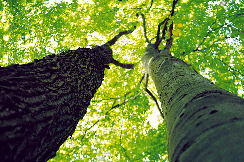 Teakbaum im tropischen regenwald  Fragen und Antworten zu Tropenholz - Rettet den Regenwald e.V.