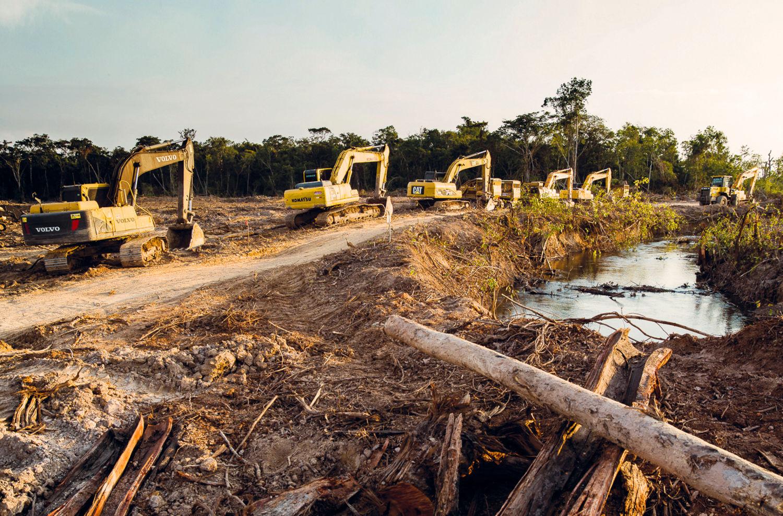 Palm Oil Nature Destruction