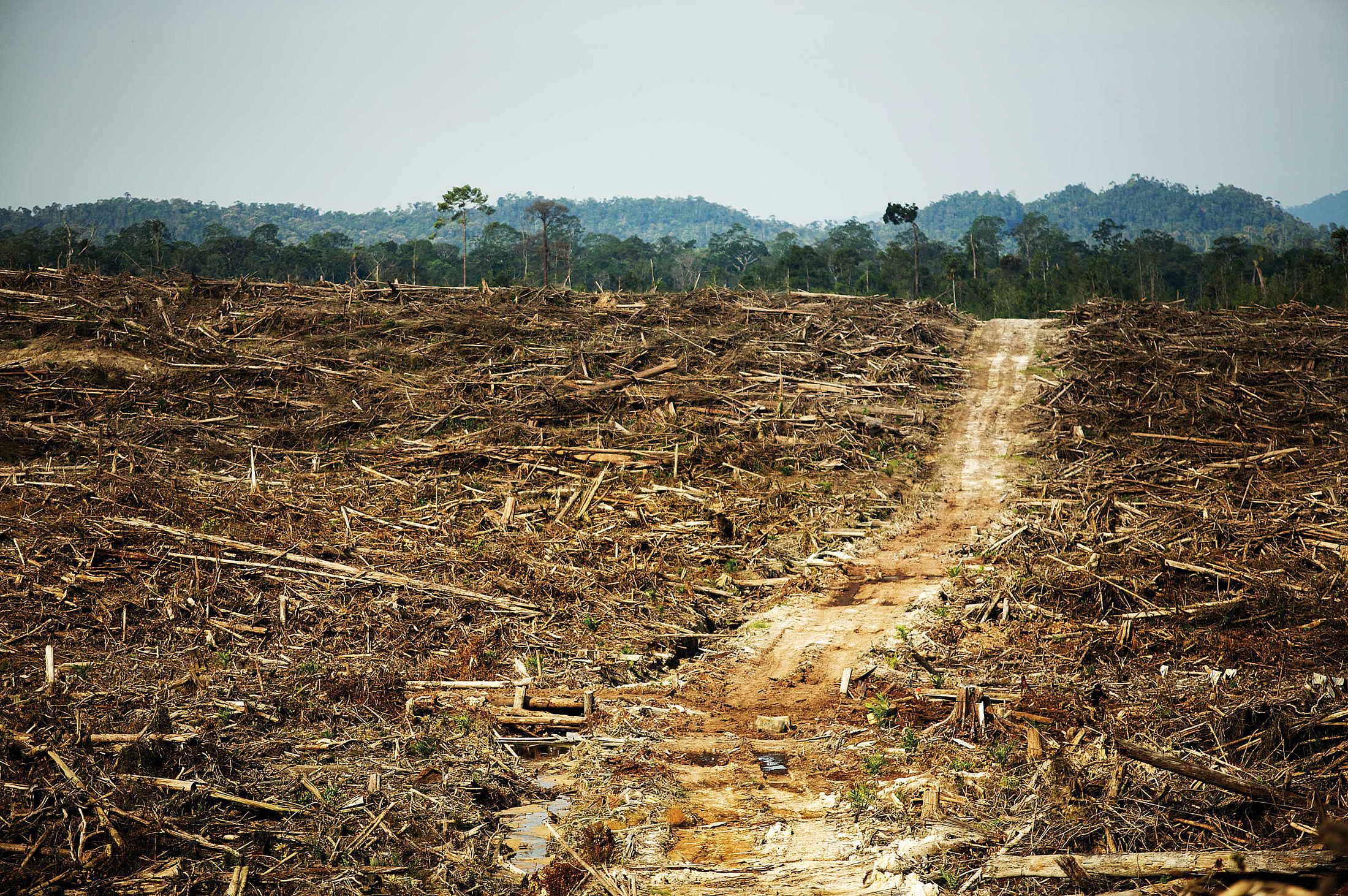 issue of devastation of the rainforest Shedding light on the devastation of the central  within central africa lies the congo rainforest,  with the growth of this issue comes the shrinking.
