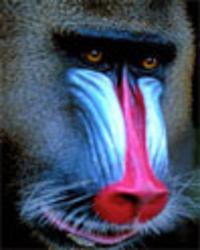 was ist ein philosophischer essay Buy nichts ist geschenkt: ein philosophischer essay über die seele by gerard visser, anna sikora (isbn: 9783883098722) from amazon's book store everyday low prices.