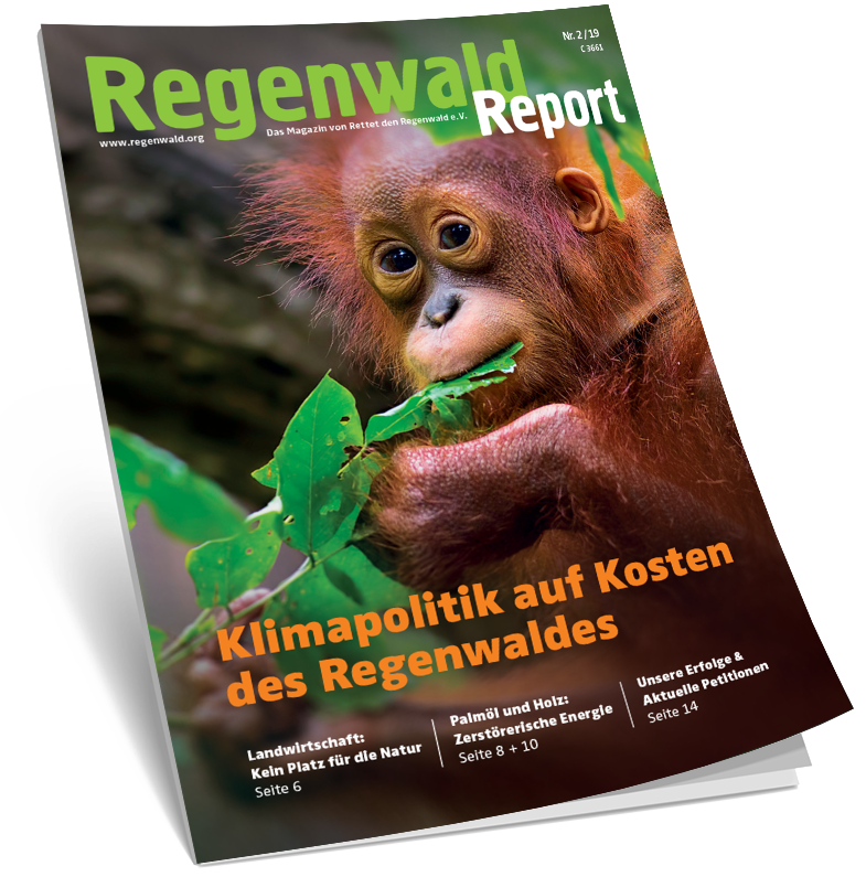 Cover Regenwald Report 02/2019