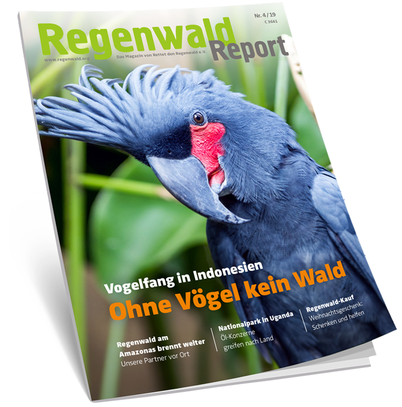 Cover Regenwald Report 04/2019
