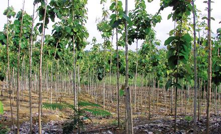regenwald report 01 2013 der irrtum ber gr ne geldanlagen rettet den regenwald e v. Black Bedroom Furniture Sets. Home Design Ideas