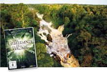 Regenwald-News DVD