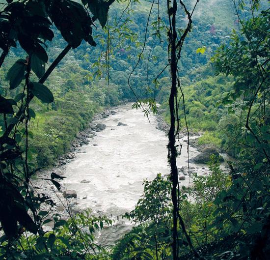 Regenwald report 03 2011 leben statt l rettet den for Boden im regenwald
