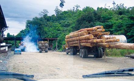 regenwald report 03 2012 tropenholz gro bank unter geldw sche verdacht rettet den regenwald. Black Bedroom Furniture Sets. Home Design Ideas
