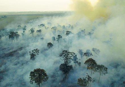 Fürs Schnitzel brennt der Regenwald