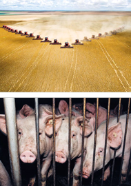 Großeinsatz bei der Soja-Ernte – die Hülsenfrucht mästet unsere Tiere in Rekordzeit