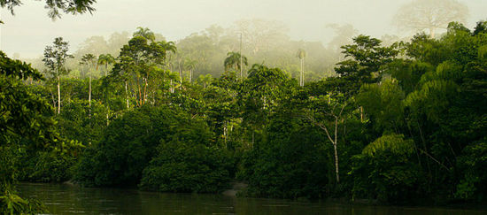 Regenwald, der an einem Fluss steht im Nebel